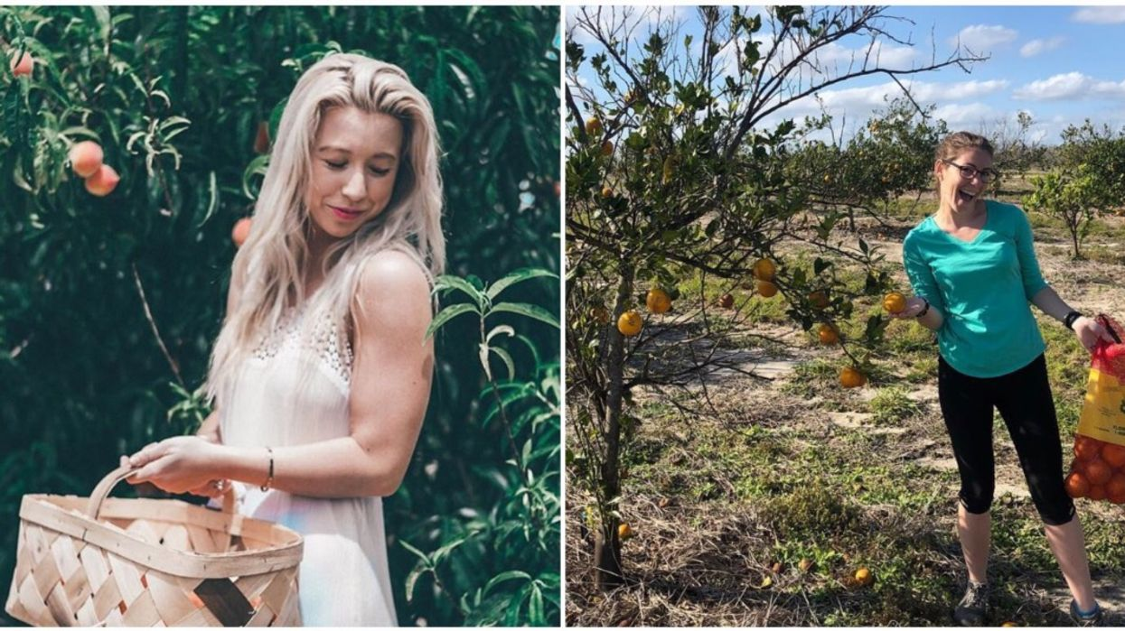 Florida Orange Picking Farm Lets You Pick Your Own Juicy Fruits Straight From The Tree