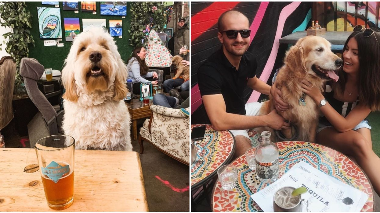 8 Pet-Friendly Patios In Alberta To Hit Up With Your Pup this Summer