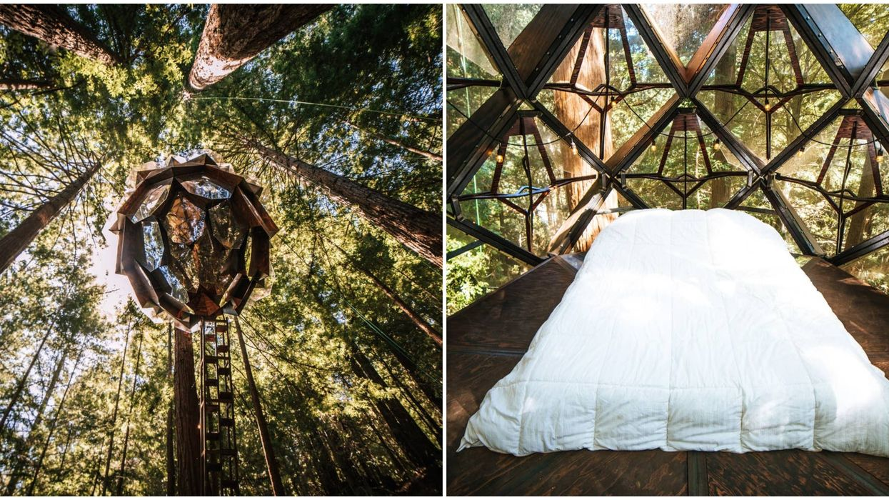 This Treehouse Airbnb In California Lets You Sleep Suspended Above The Redwood Forest