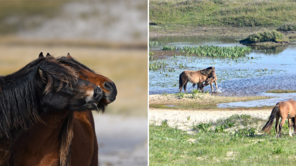 This Secluded Nova Scotia Island Has More Wild Horses Than Humans