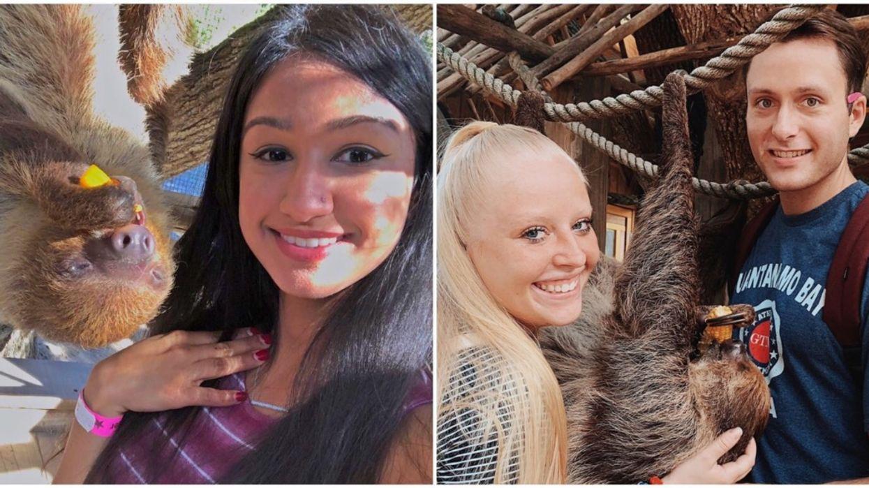 This Safari Near Orlando Lets You Pet Sloths