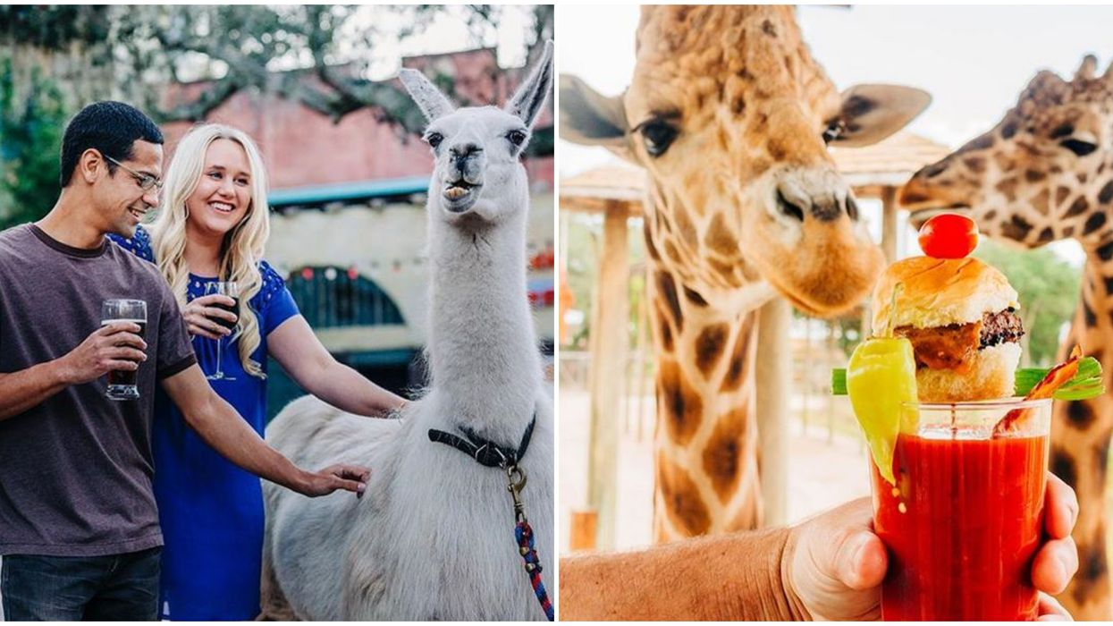 This March ZooTampa's ZooBrews Is Back For Adult Only Fun