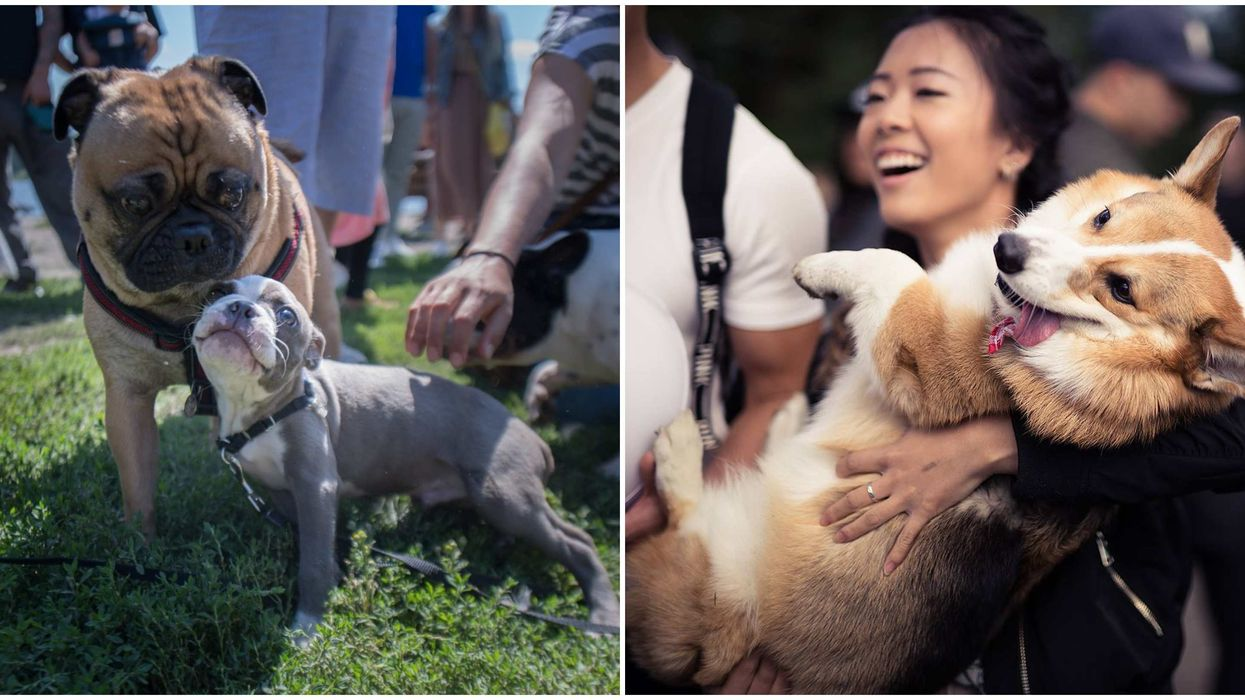 """Vancouver's """"Biggest Dog Meetup"""" Lets You Meet With Hundreds Of Doggos This Week"""