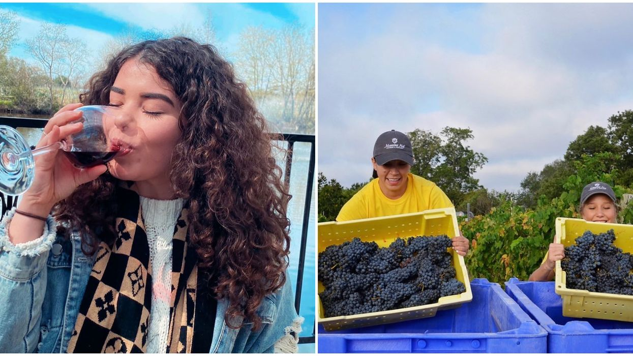 This Free Wine Fest Near Houston Will Have A Grape Stomp This Spring