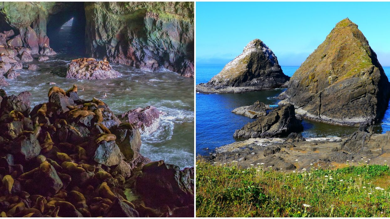 Sea Lions In A Cave Can Be Seen On A Roadtrip To Oregon From Washington This Spring