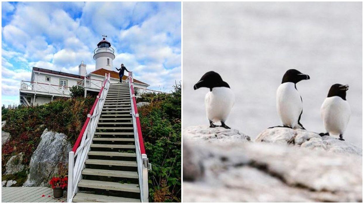 Tu peux dormir dans un phare et observer une colonie de pingouins à 2h de Québec