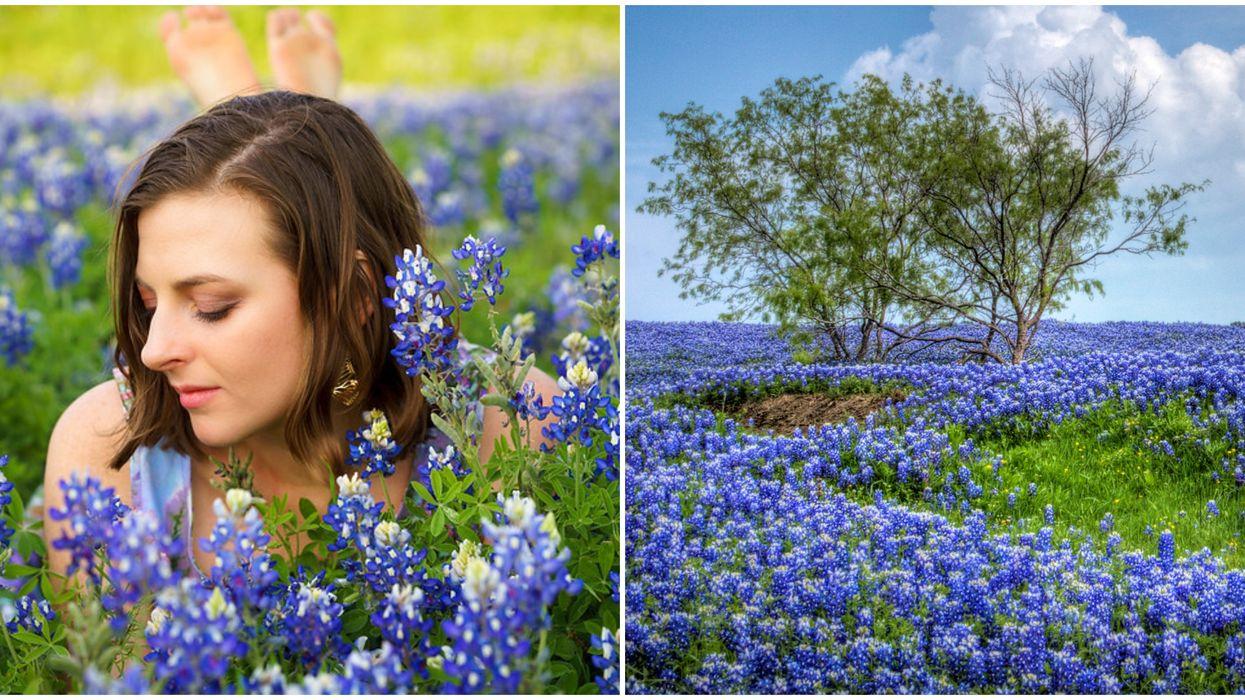 A Bluebonnet Festival Near Austin Is Next Month