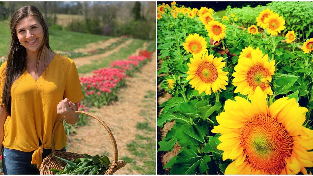 This U-Pick Flower Farm In Tennessee Is Springtime Goals
