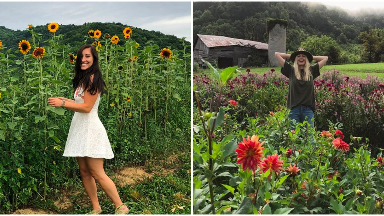 Flower Field In North Carolina Offers Picturesque Views Of Mountains