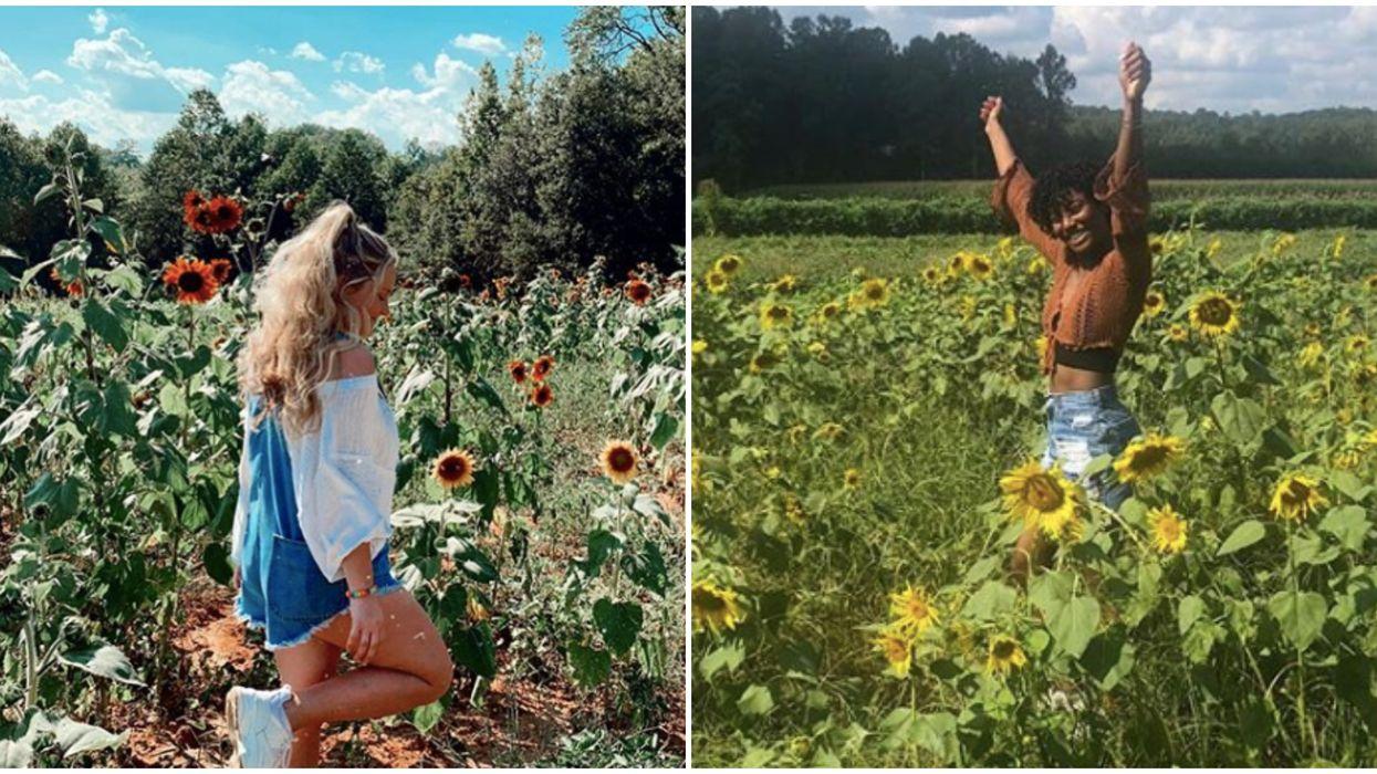 Sunflower Field Near Georgia Will Be A Dreamy Summertime Adventure