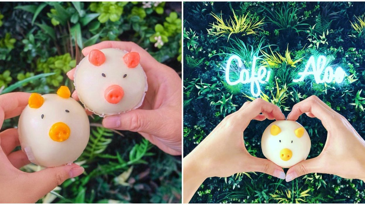 Asian Cafe In Bellevue Washington Serves Cute Custard Piggy Buns For Only $2