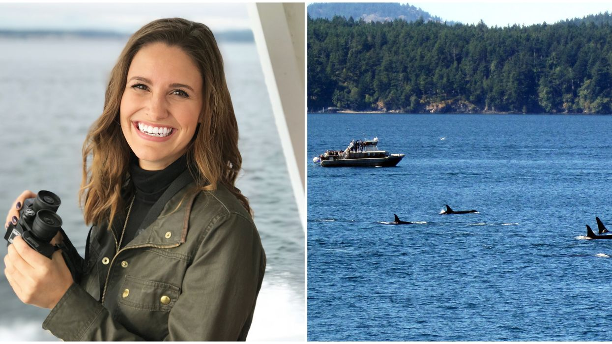 Best Places To Whale Watch In Washington This Season