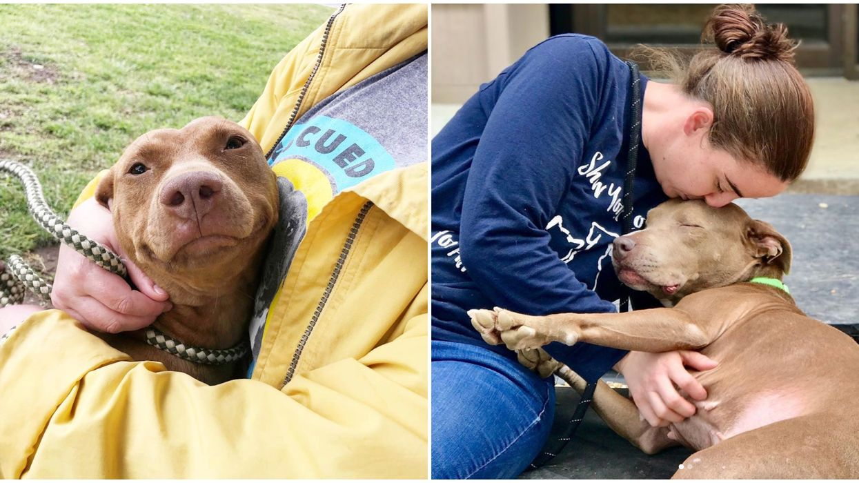 Atlanta Animal Shelter Let's Dog Lovers Take Pups On Weekend Hikes