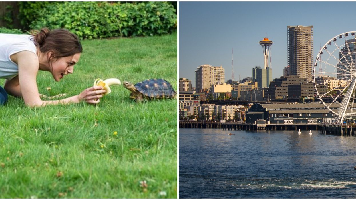 7 Movies Filmed In Seattle That'll Bring The City To Your Living Room