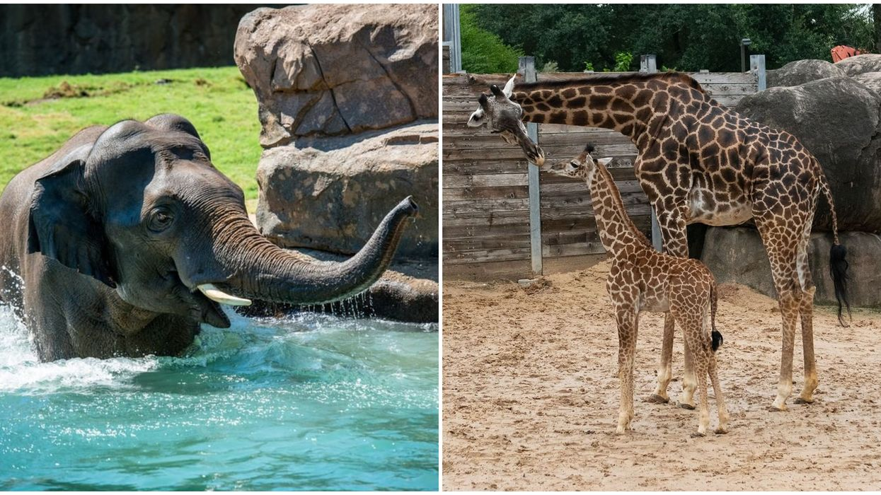 The Houston Zoo's Live Cams Let You Experience The Zoo From Home