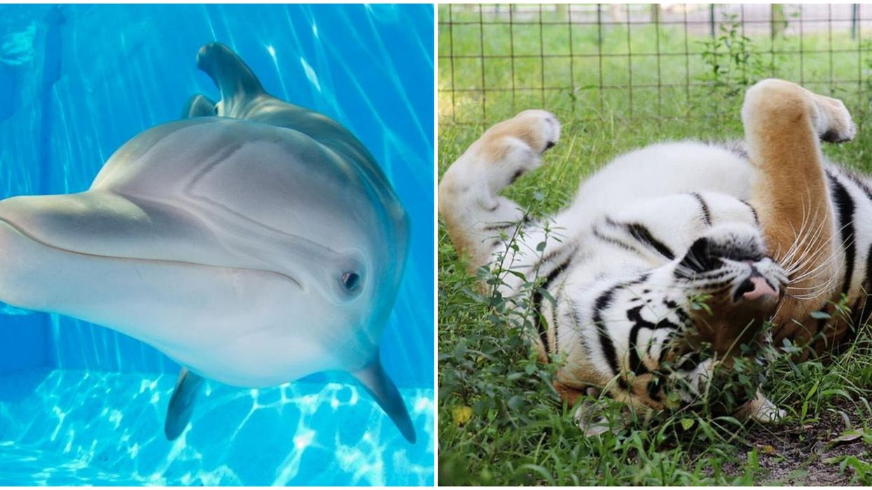 6 Live Florida Animal Cams To Watch When You're Stuck At Home