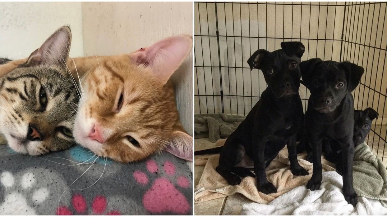 Foster Dogs And Cats In Austin To Avoid Overcrowding At Shelters