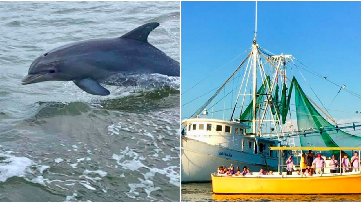 Dolphin Tour In Savannah Is Offering An Immersive Cyber Experience