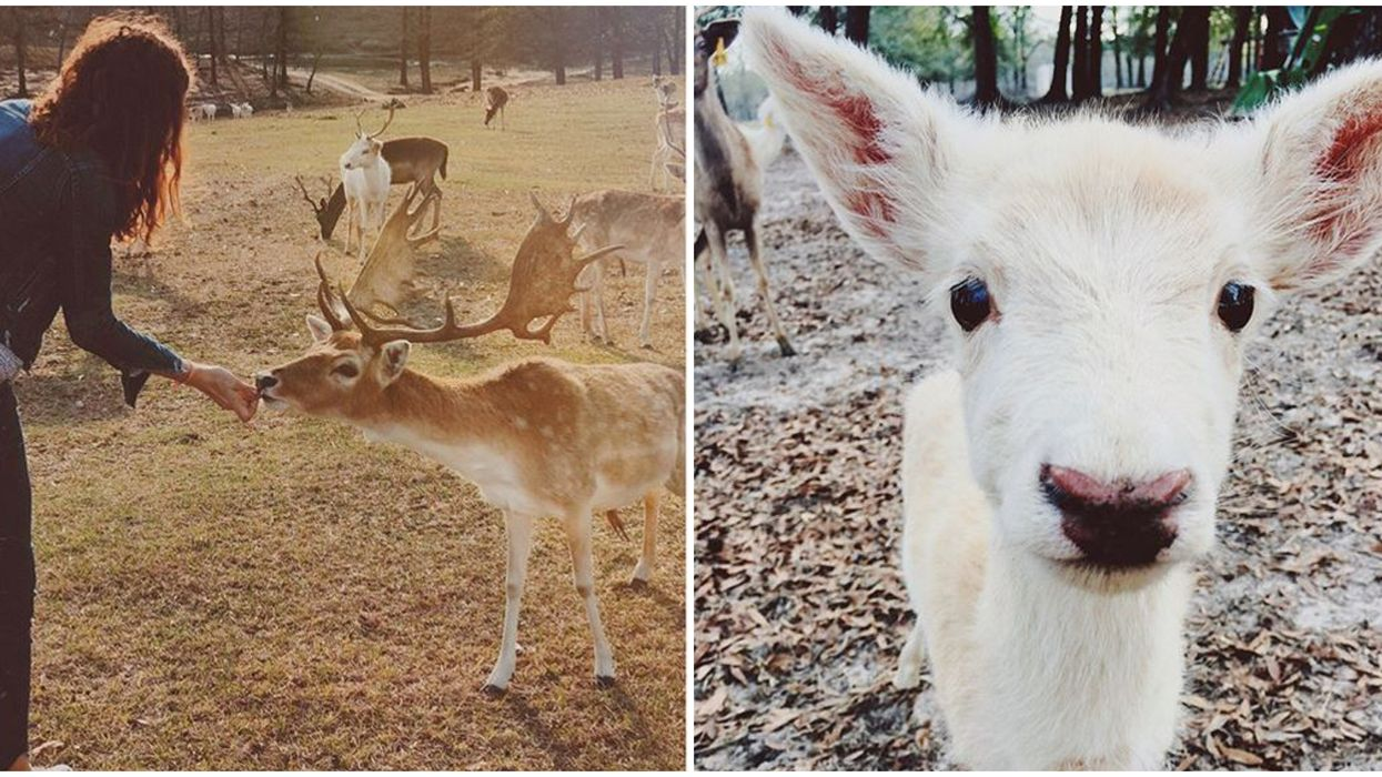 Florida Farm Animal Encounter Lets You Hang Out With Adorable Baby Deer