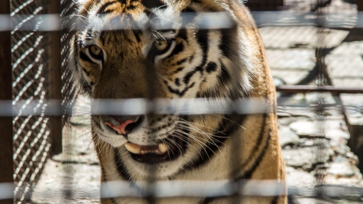 Tiger King Is Showing Tampa's Big Cat Rescue In A Whole New Light