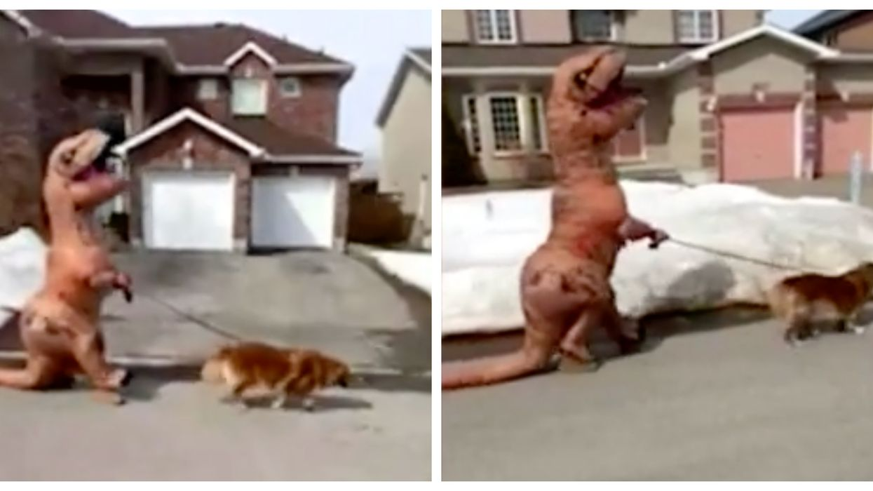 This Dog Walker In Ottawa Practices Social Distancing In A T-Rex Costume (Video)