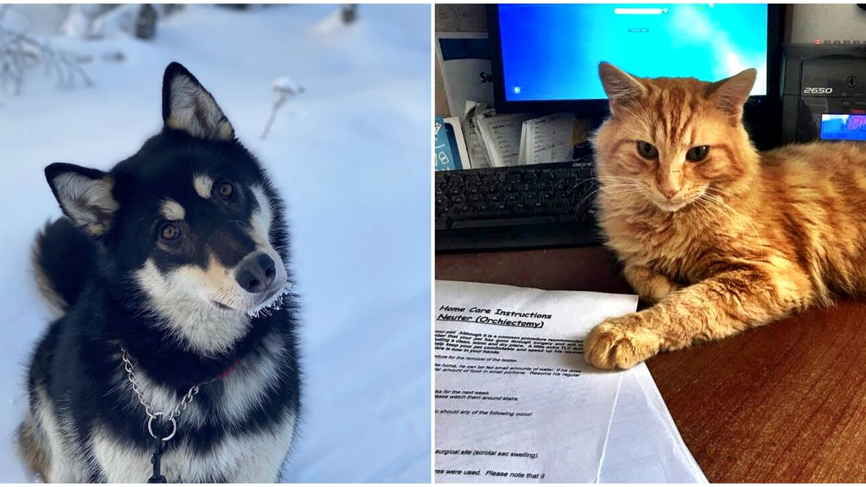 NWT SPCA Has More Animals Out In Foster Care Now Than Usual As People Stay At Home