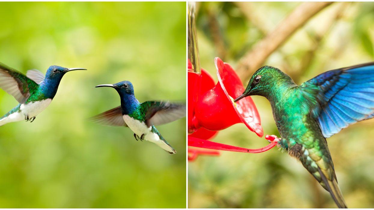 Hummingbird Season In North Carolina Is Right Around The Corner