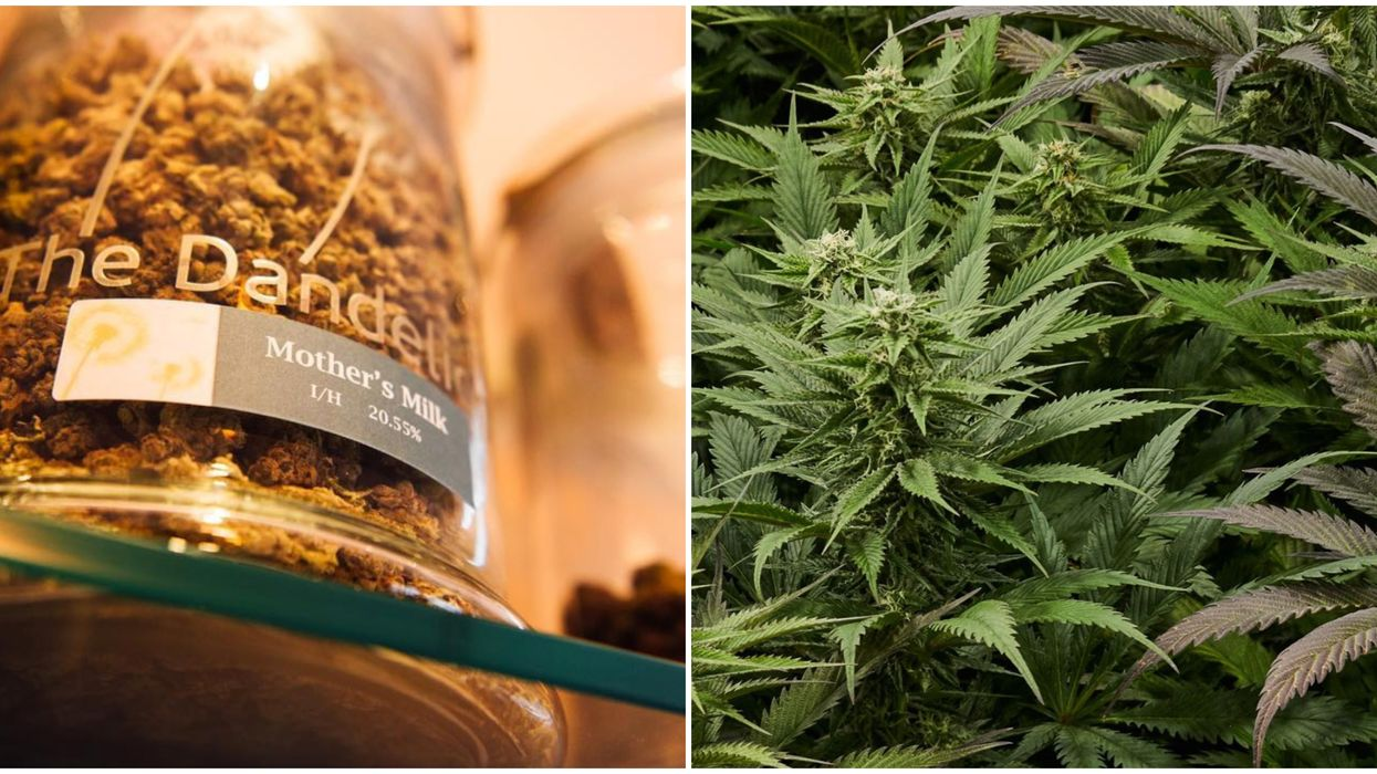 Dandelion In Boulder Colorado Is A Dispensary Offering Front Door Deliveries