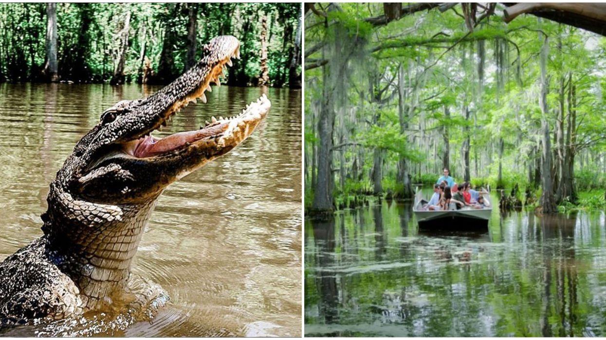 You Can Go On An Exhilerating Virtual Cajun Adventure Through The Louisiana Swamps