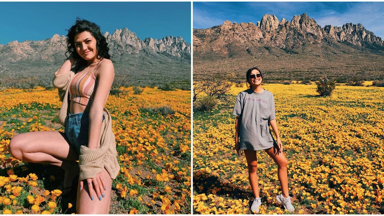 Las Cruces' Organ Mountains Poppies Are Now In Bloom