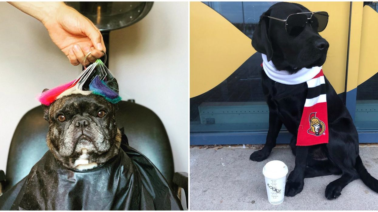 NHL Players With Dogs Who Live More Lavishly Than We Ever Will