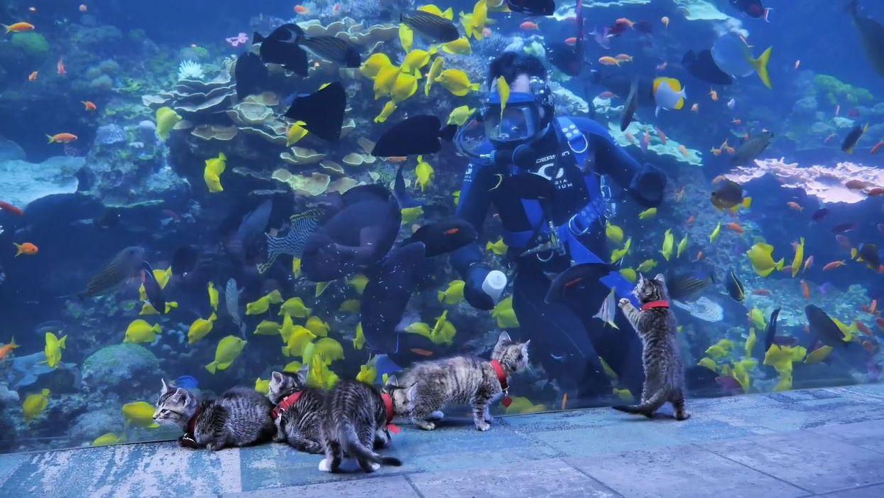 Georgia Aquarium Live Cam Gave Atlanta Kitties A Behind-The-Scenes Look