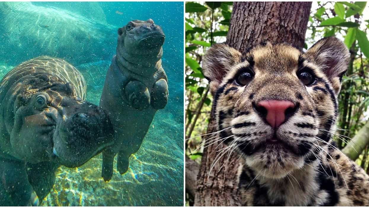 San Diego Zoo's Virtual Spring Break Party Means You Can Go Wild At Home