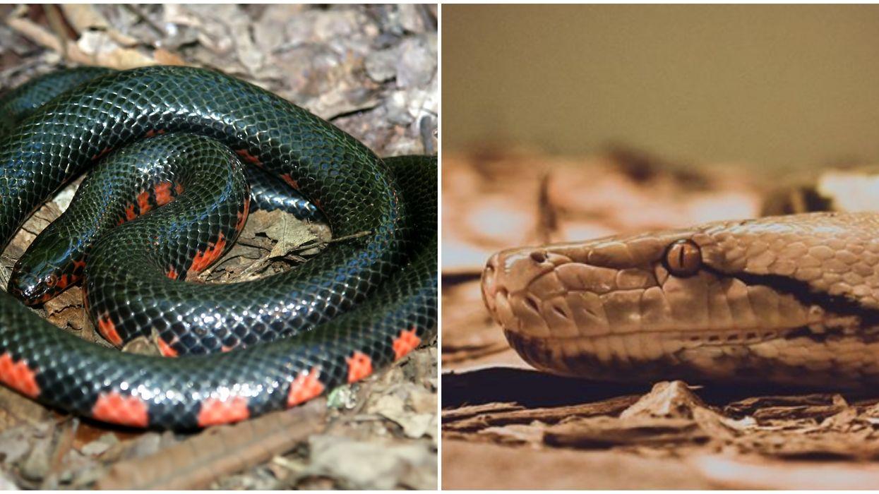 Non-Venomous Snakes Of Virginia Beach Are Coming Out Of Hibernation