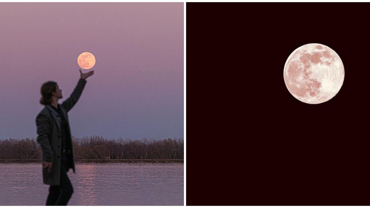 11 photos à couper le souffle de la pleine lune rose qui brillait hier soir au Québec