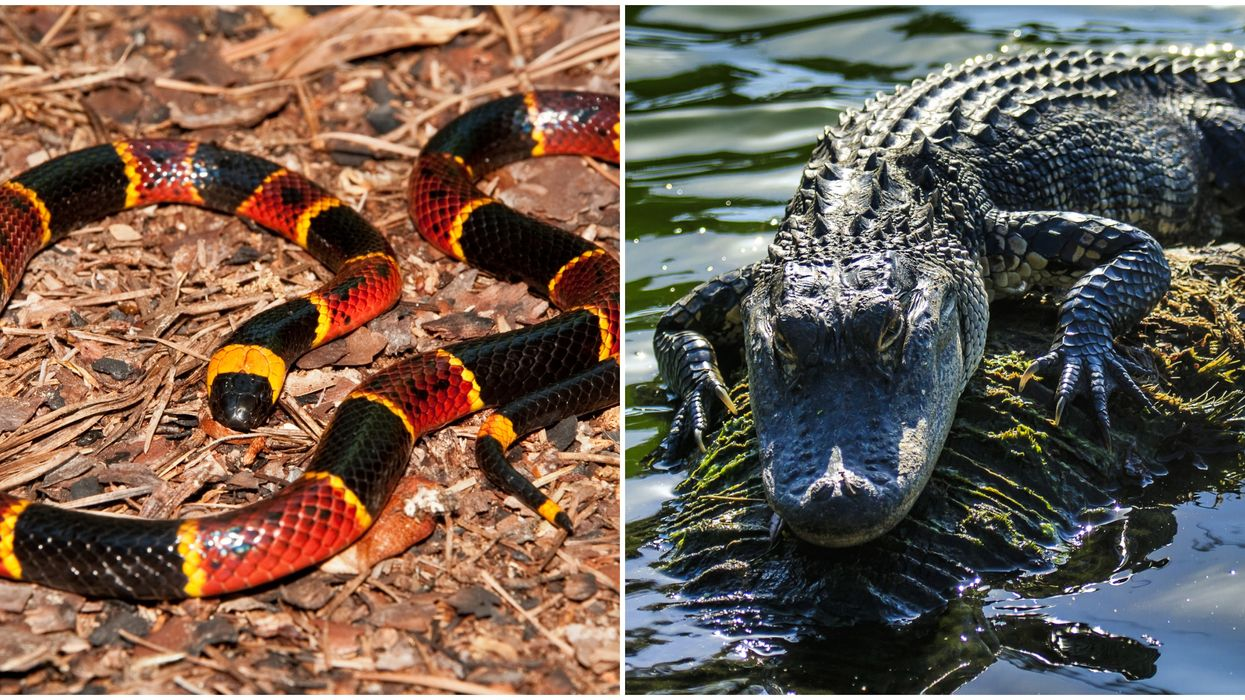 Snakes & Alligators Are In Texas & We Should Stay Away