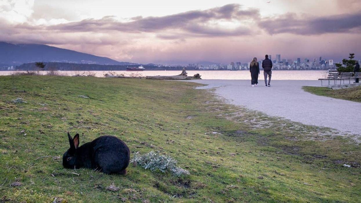 Bunnies Of Jericho Beach: Hidden Bunny Beach In BC Is Canada's Cutest Secret Spot (PHOTOS)