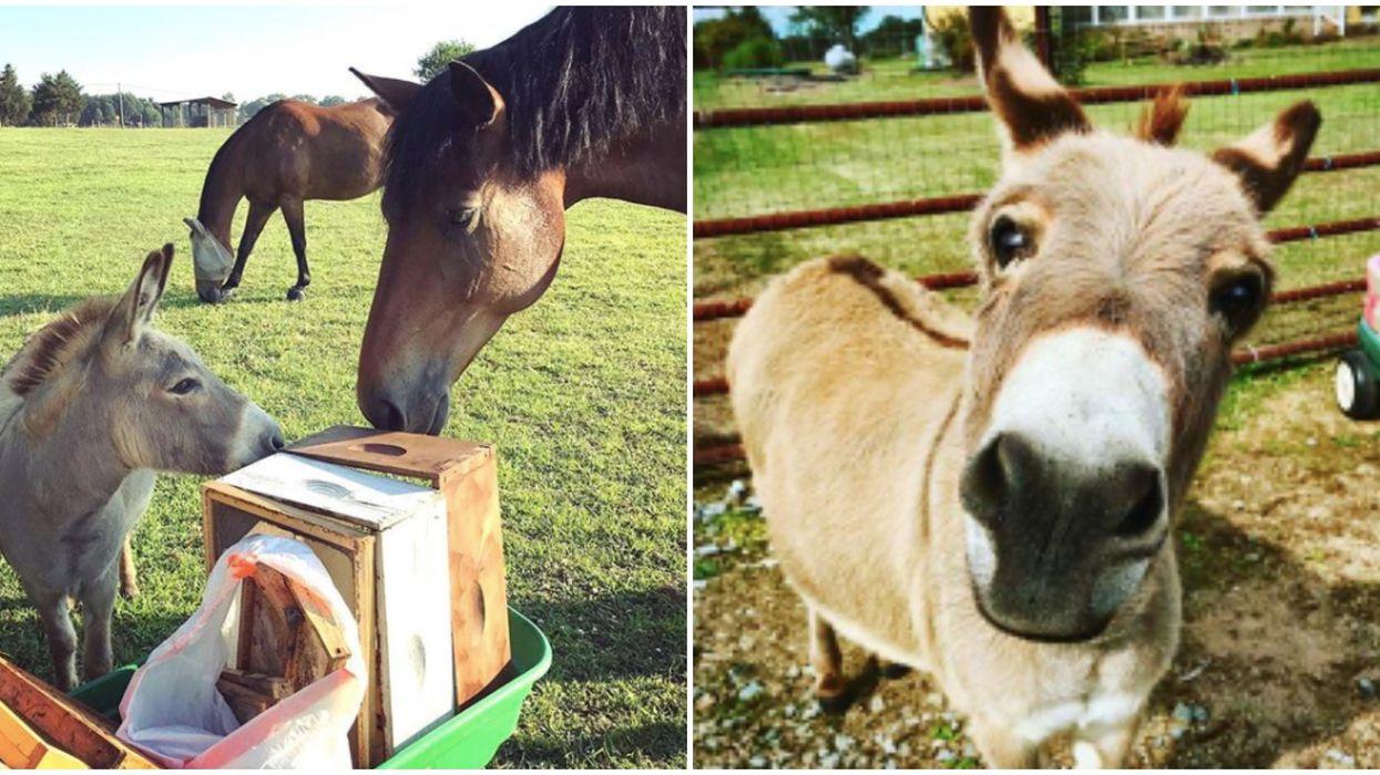 Farm In North Carolina Is Offering Animal Zoom Meetings