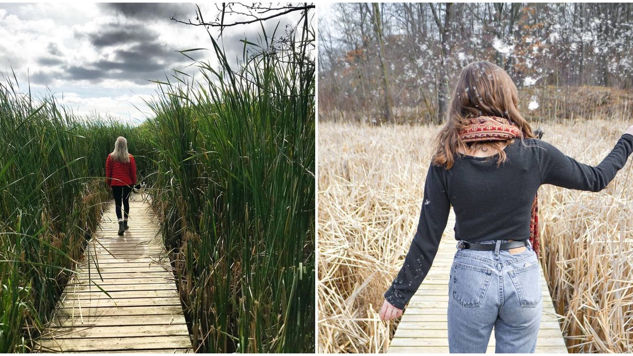 Cootes Paradise Marsh Will Make You Feel Like You're In A Fairytale Forest