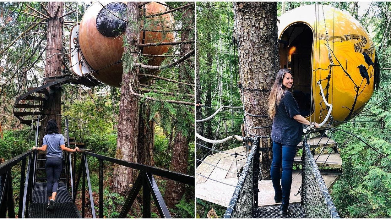 Treehouse Bubbles In BC Are Hanging In The Forest & Make A Magical Trip