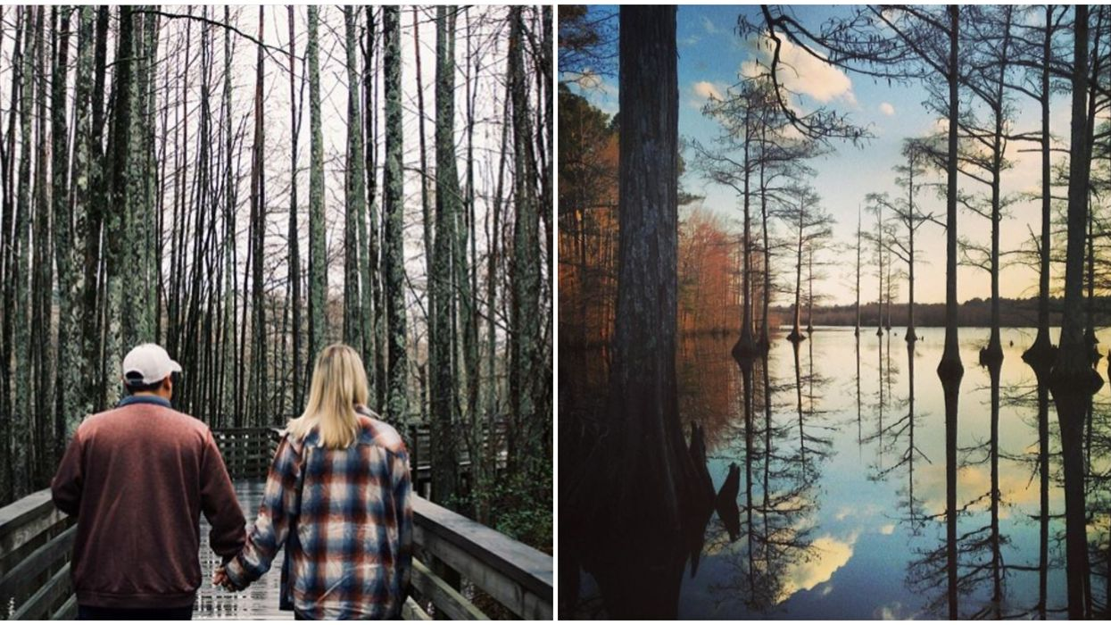Mississippi Park Makes The 'Bridge To Terabithia' Feel Real On This Boardwalk Trail