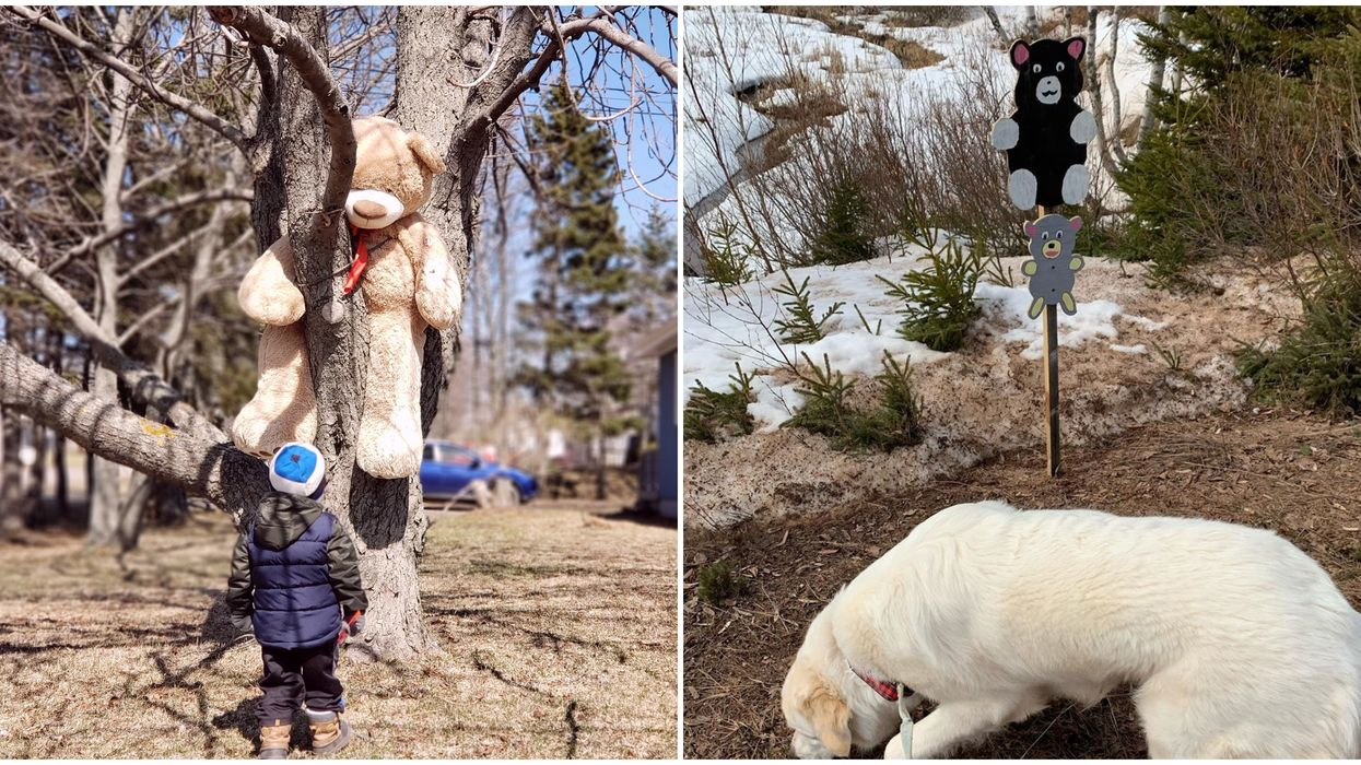 PEI Bear Hunt Is The Latest Social Distancing Trend & It's Unbearably Wholesome (PHOTOS)