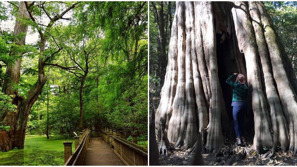 Mississippi's Sky Lake Boardwalk Hike Is Home To Enchanting Hollow 1000 Year Old Trees