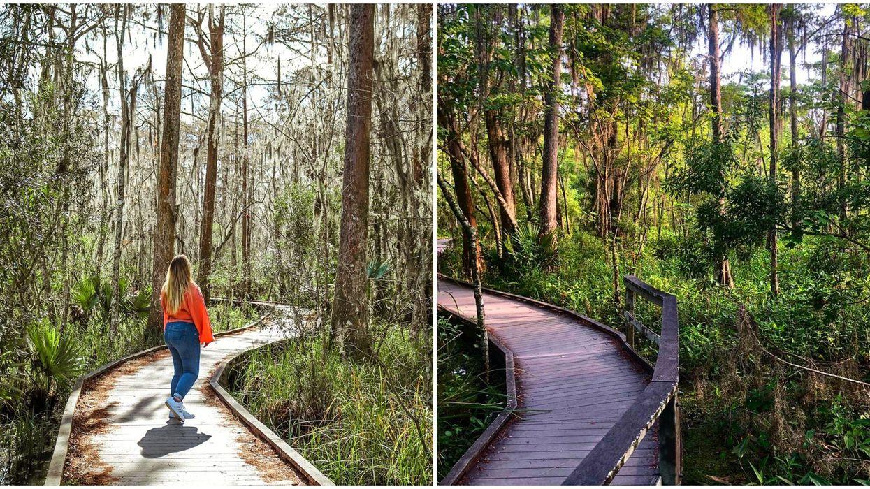 New Orleans Louisiana National Park Has Lush Boardwalks & Battlefields