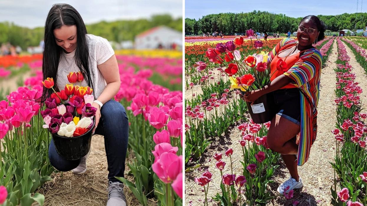 Le festival de 500 000 tulipes sera de retour à Laval et Boucherville ce printemps