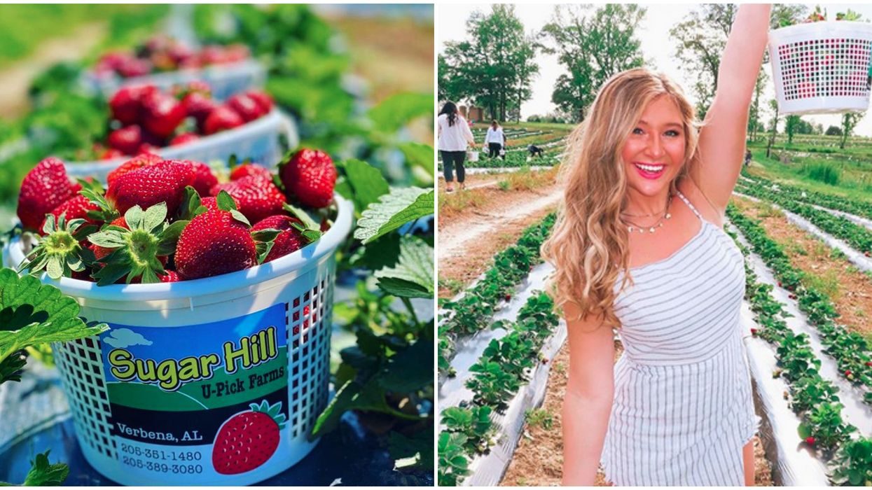 Pick Strawberries In Alabama At This Adorable Farm For A Perfect Day Trip