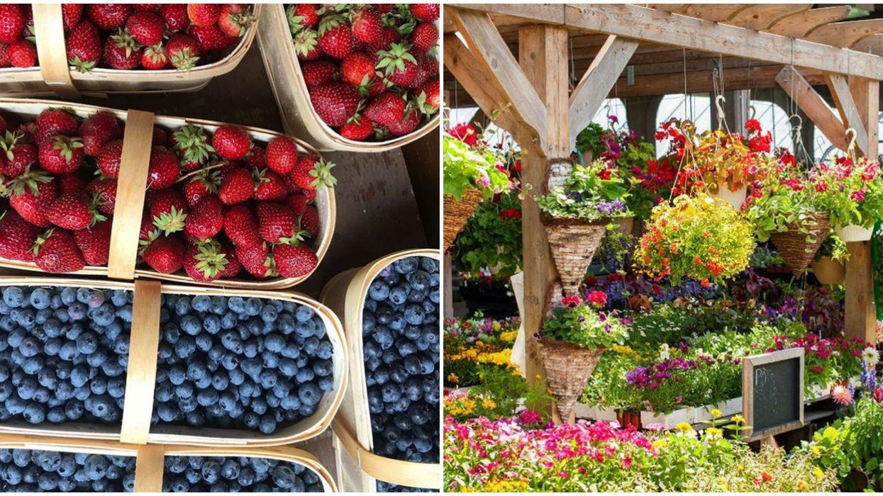 Petits fruits et fleurs