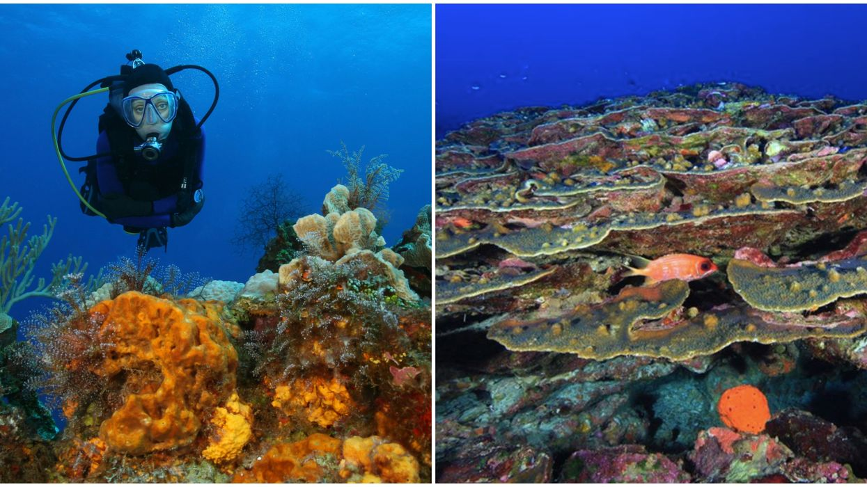 You Can Explore This Crystal Blue Natural Coral Reef Off Houston's Coast