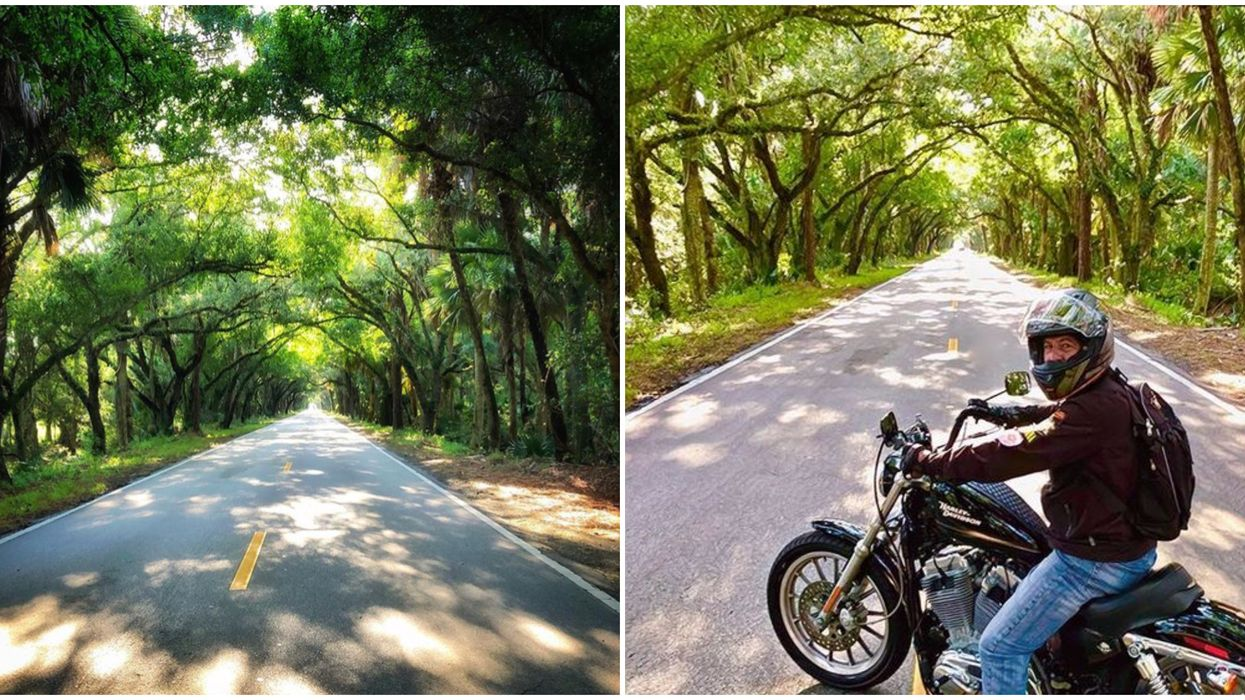 12 Mile Scenic Florida Drive Brings You Through Tunnels Of Ancient Trees