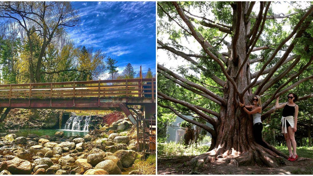 Toronto Has A Lush Garden With Mini Waterfalls & An Enchanting Secret Tree